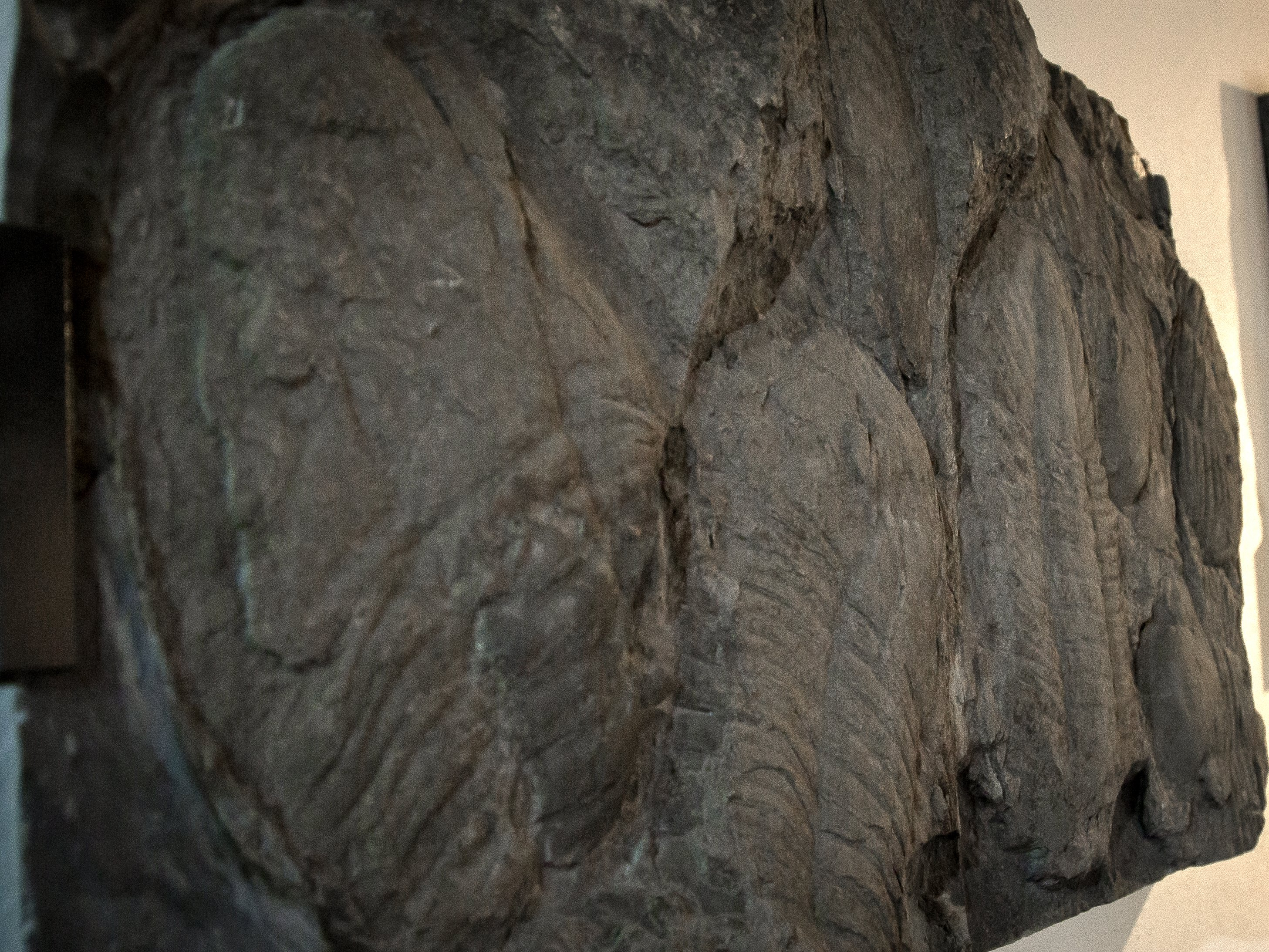 Fossils collection of the Geological Interpretative Center